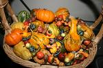 Autumn Display of Gourds