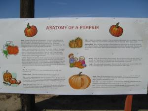 Pumpkin's Anatomy by Elizabeth W.